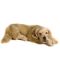 peluche Peluche Golden retriever allongé 60 cm