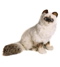 peluche Peluche Chat Birman assis 50 cm