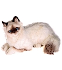 peluche Peluche Chat Birman allongé 45 cm